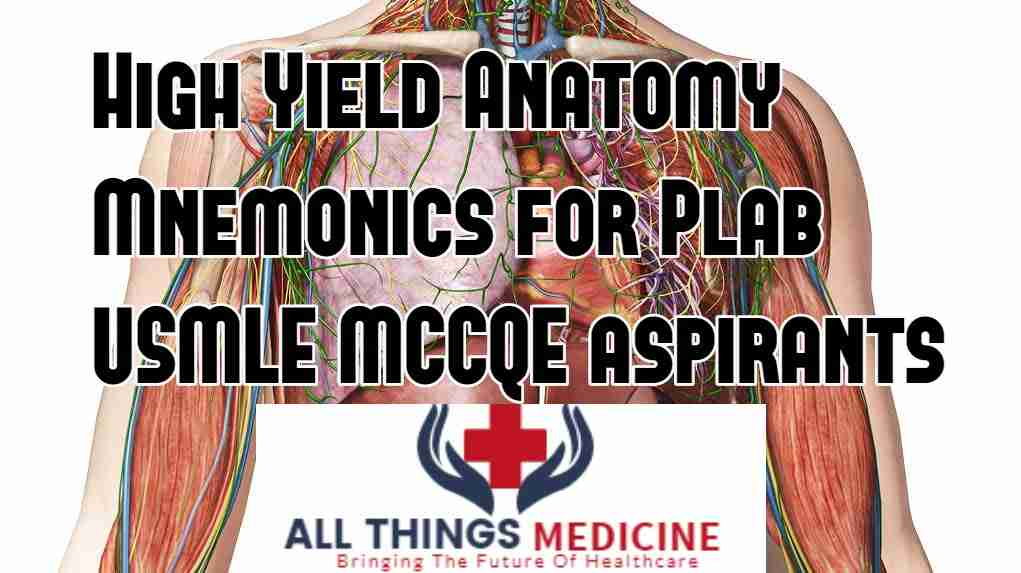 High-yield Anatomy mnemonics | contents, shapes and sizes of structures